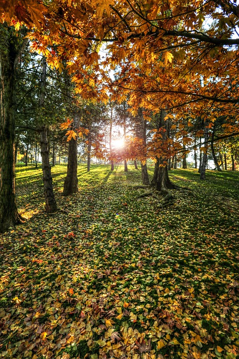 Solar, Forest, Tree, Sunlight, Holding, The Leaves Are