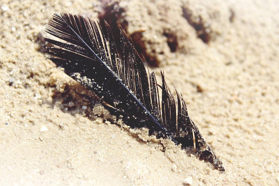 Sand, Beach, Lake, Nature, Holiday, Spring, Bird, Moist