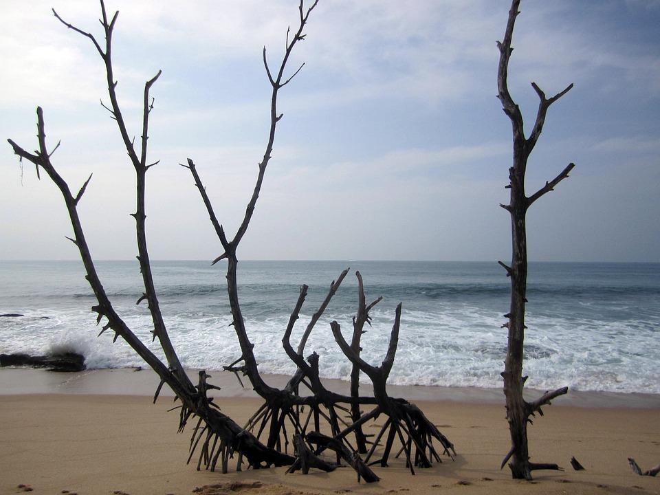 Beach, Tropical, Sri Lanka, Holiday, Sea