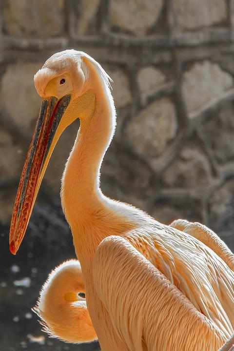 Big, Bird, Zoo, Giza, Egypt, Holiday, Visit, Week End