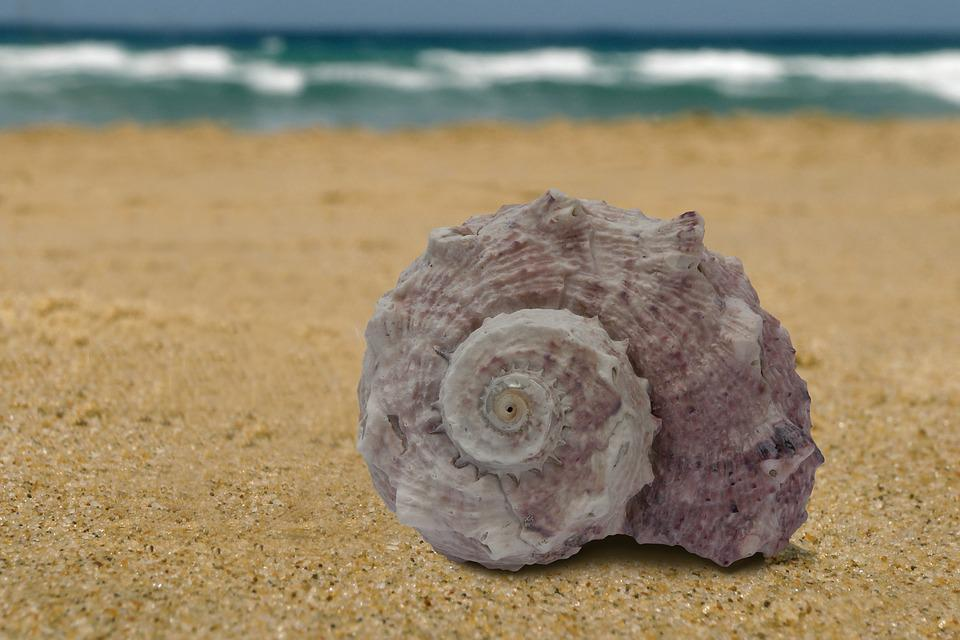 Sea Snail, Snail, Sea, Holiday, Memory, Housing, Spiral