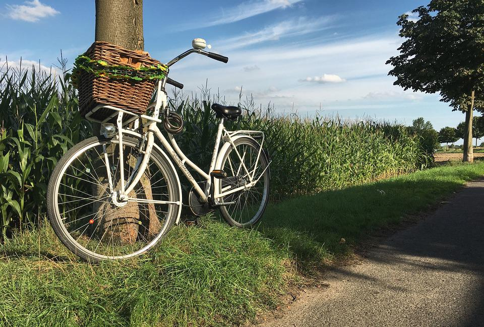 Dutch, Wheel, More, Corn, Field, Holiday, Exit, Air