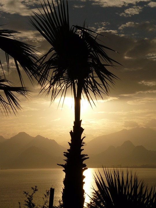 Palm, Antalya, Sea, Outlook, Palm Trees, Idyll, Holiday