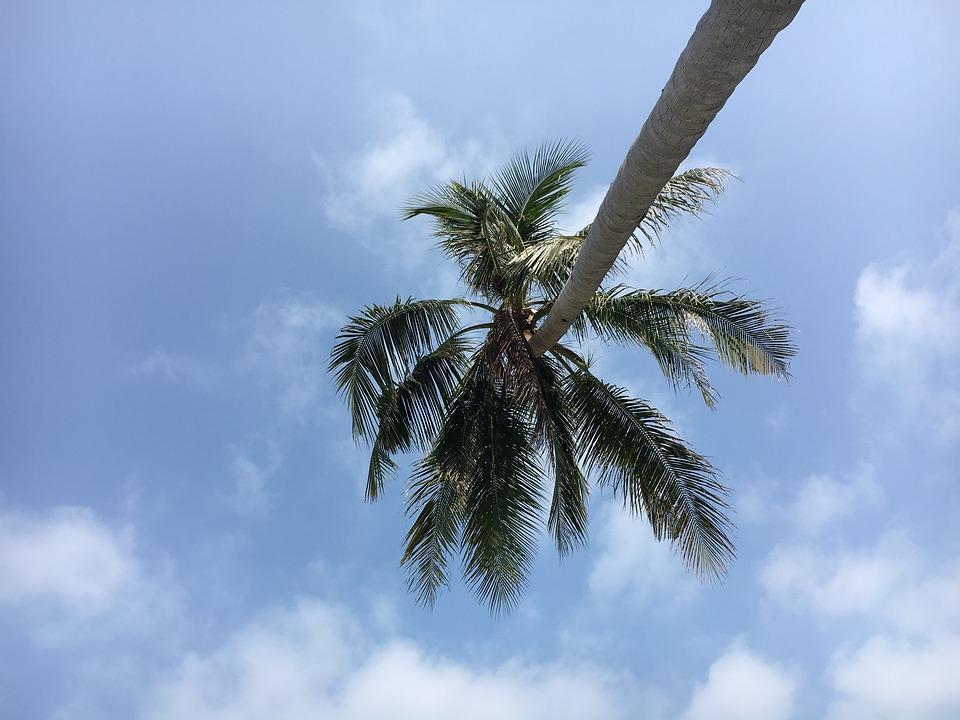 Asia, Thailand, Holiday, Sky, Blue, Palm