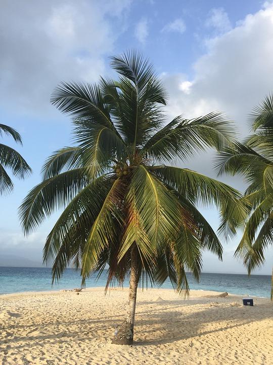 Caribbean, Beach, Palm, Sun, Holiday, Sea