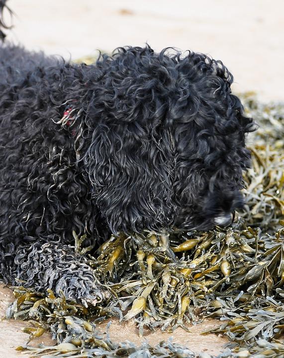 Dog, Beach, Holiday, Seaweed, Playing, Vacation, Shore