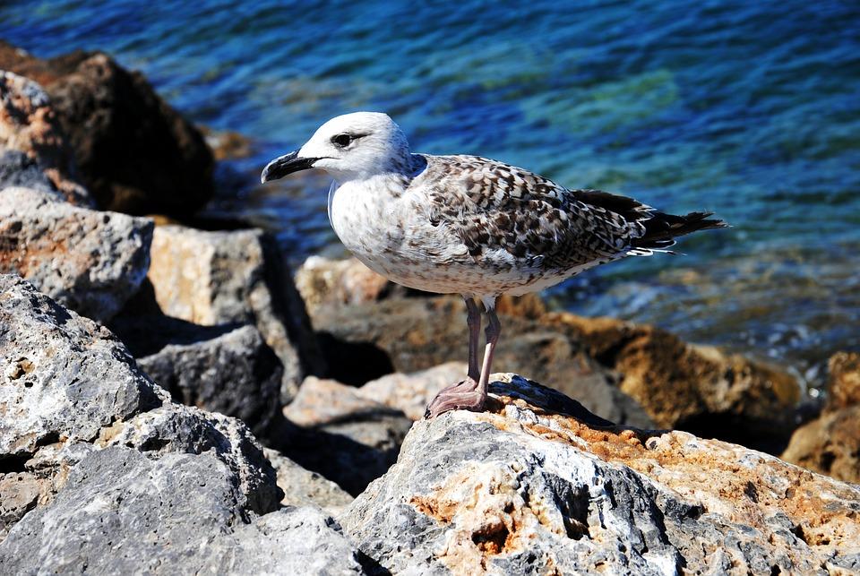Seagull, Rocks, Sea, Holidays, Bird, Holiday