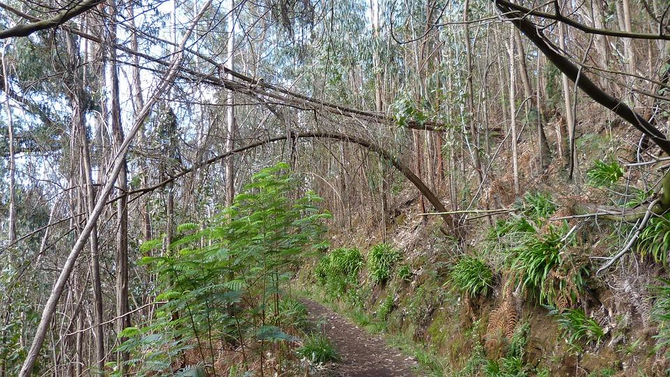 Madeira, Portugal, Levada, Trail, Holiday