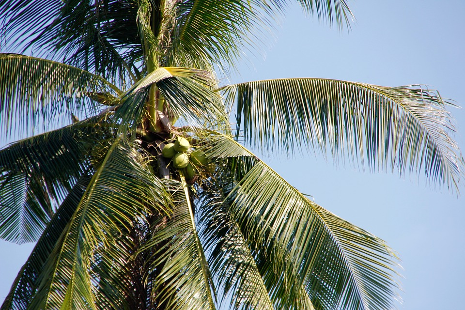 Thailand, Palm, Sky, Holiday, Wave, Nature