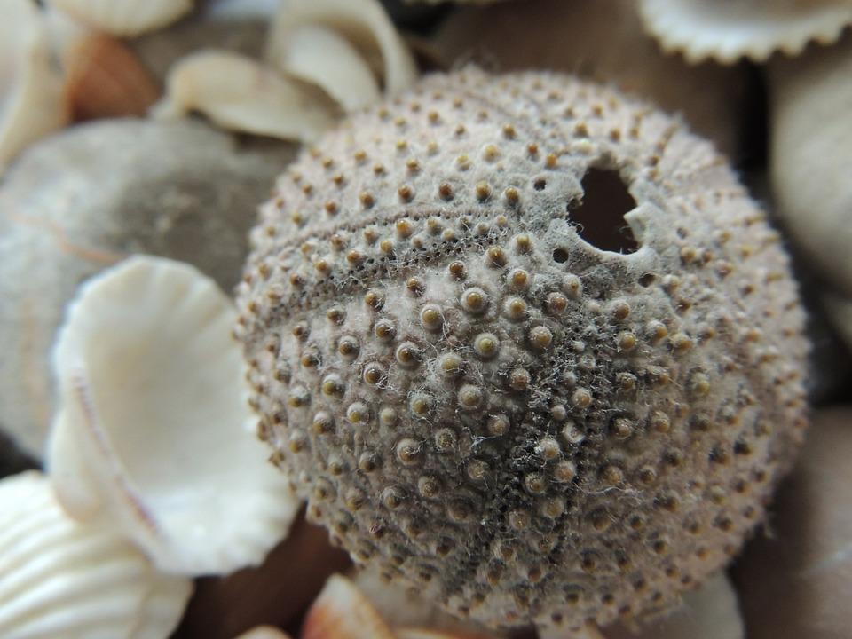 Seashell, Holidays, Macro