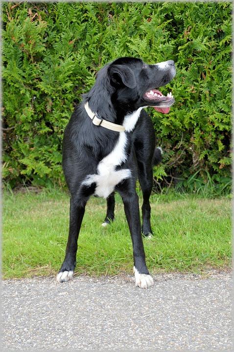 Dog, Dogs, Pet, Holland, Model, Outdoor, Posing, Animal