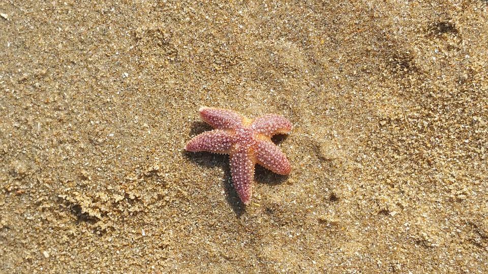 Starfish, Katwijk, Holland