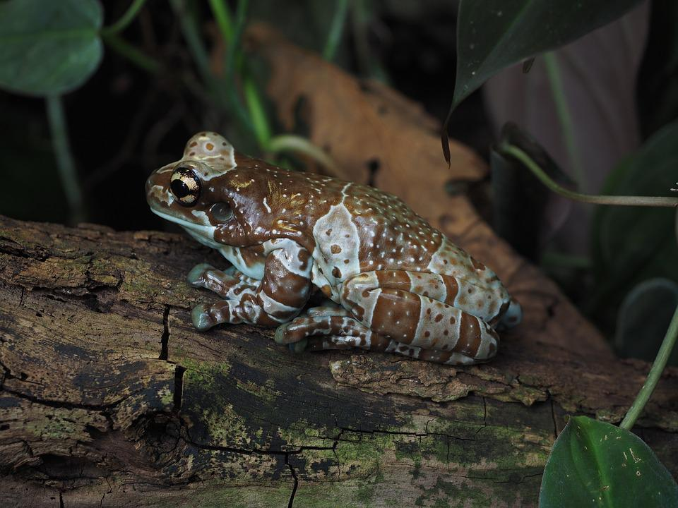 Frog, Hollow Of A Tree Frog, Toad Tree Frog