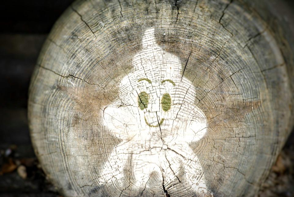 Log, Graffitti, Forest, Nature, Holsfällen, Tree Cases