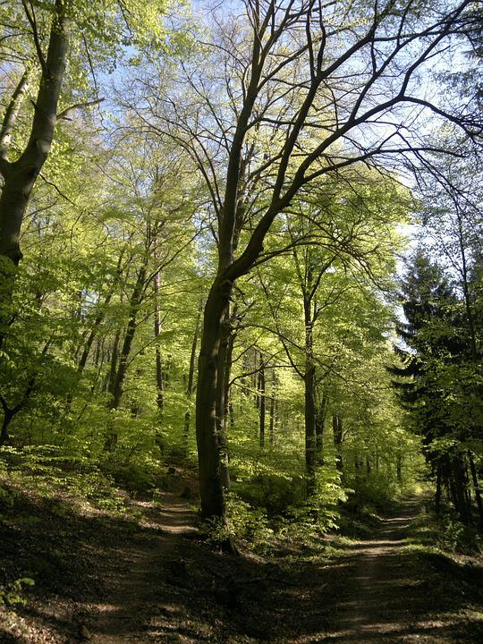 Forest, Holy Mountain, Heidelberg