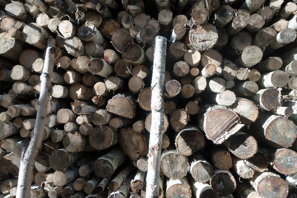 Wood, Birch, Firewood, Holzstapel, Growing Stock