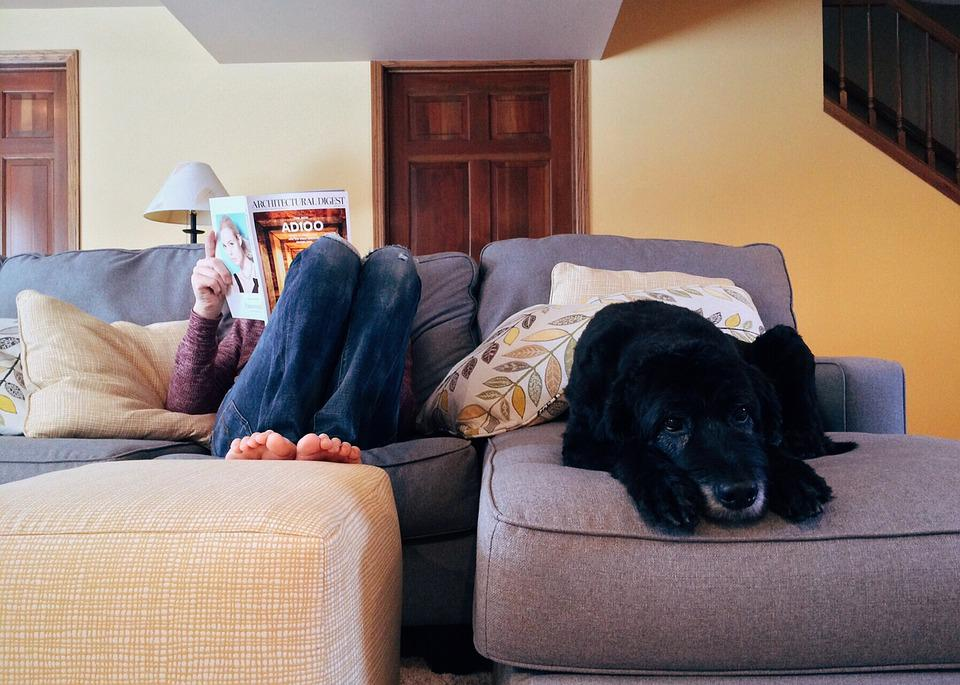 Person, Home, Relax, Dog, Lifestyle, Indoors