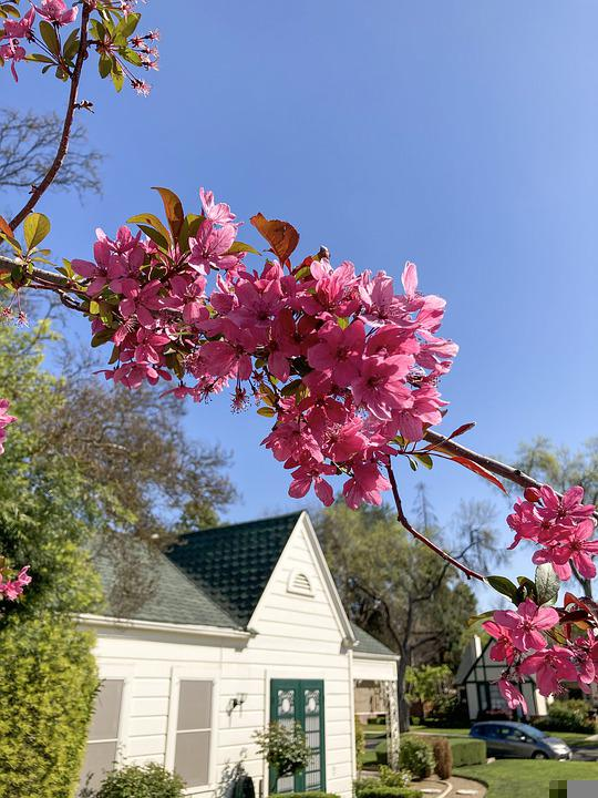 House, Home, Blossoms, Flowers, Tree, Bloom, Spring
