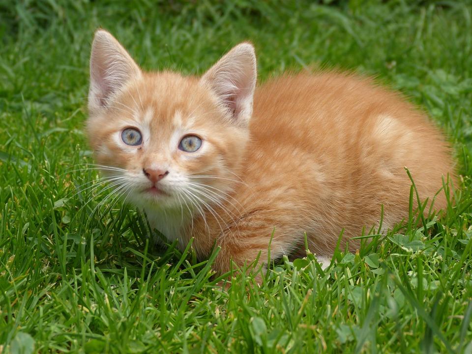 Cat, Small, Kitten, Sweet, Home