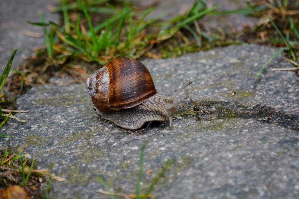 Animals, Snail, Home, Summer