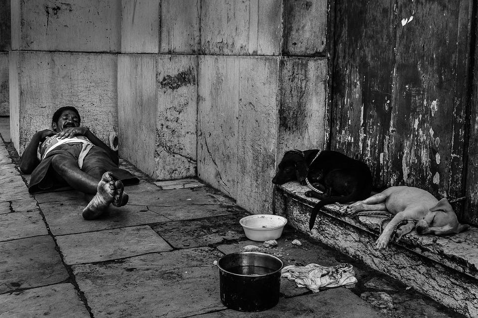 Dogs, Poverty, Recife, Homeless, Misery, Homelessness