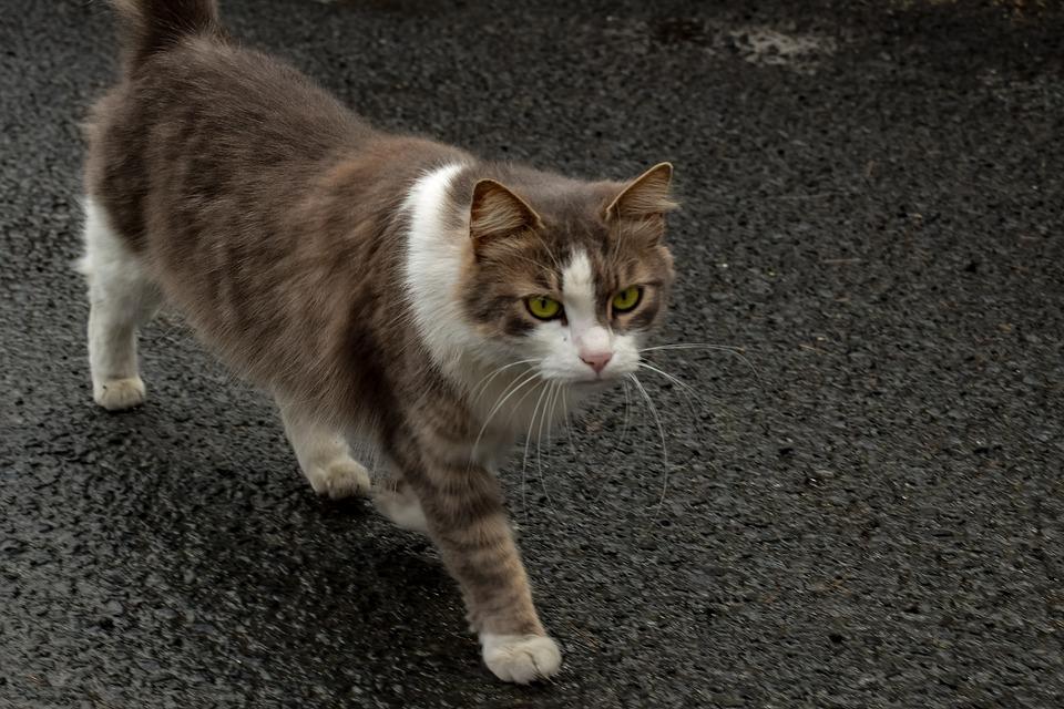 Cat, Stray, Animal, Outdoors, Homeless, Portrait