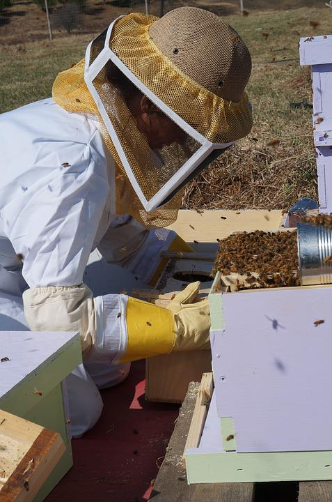 Farming, Beekeeping, Bees, Honey, Beehive, Bee, Apiary