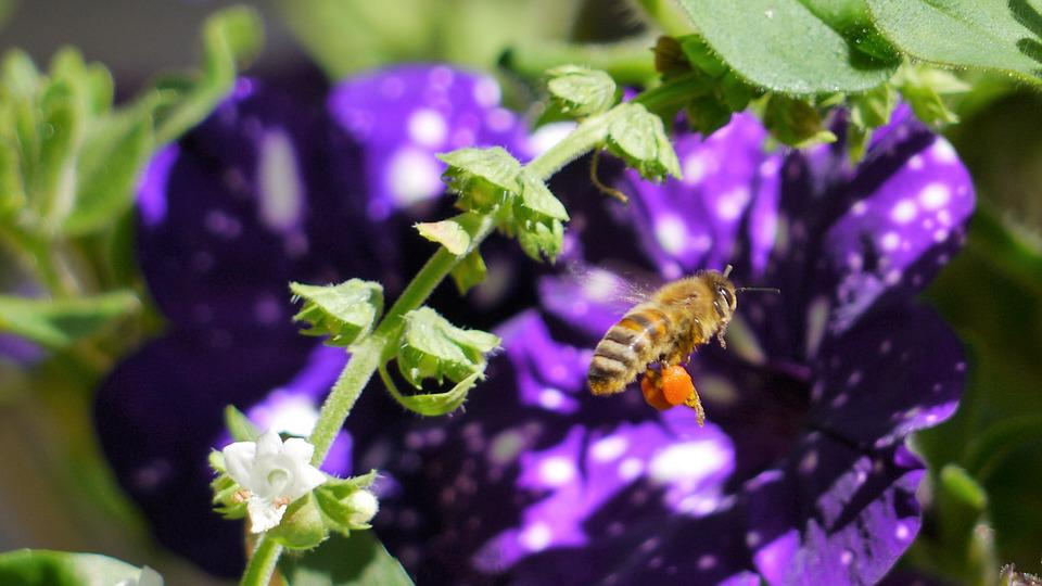 Bee, Insect, Honey Bee, Flower, Nature, Plant, Leaf