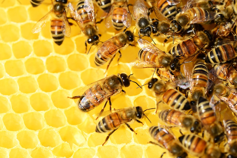 Honey Bees, Beehive, Honey, Bees, Swarm Of Bees