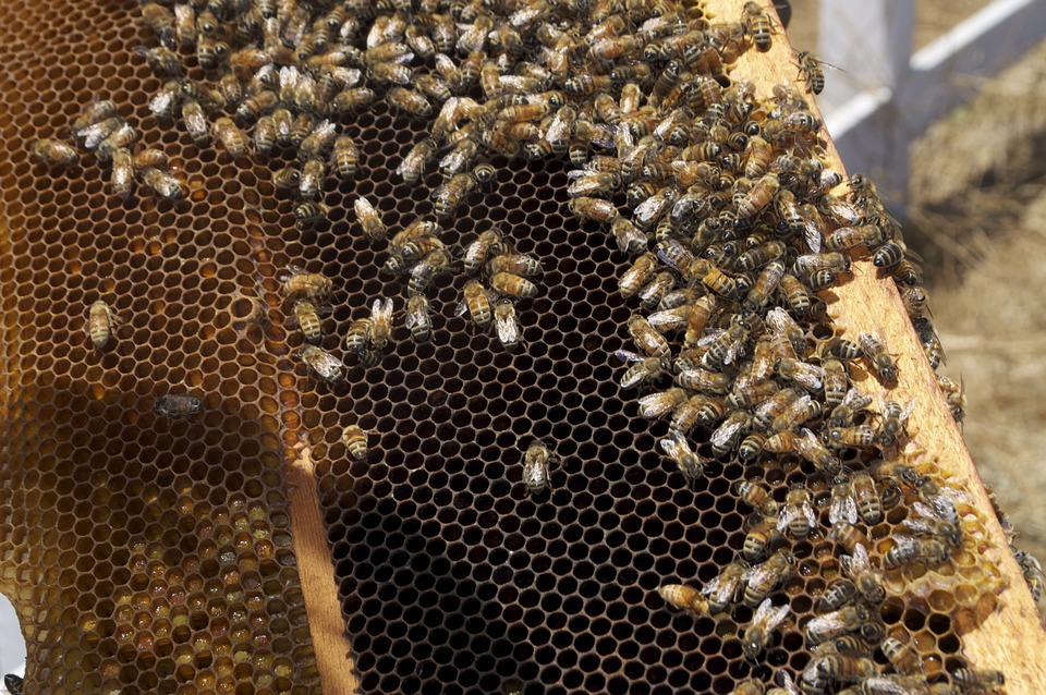 Honey, Honeybee, Honey Jar, Bee, Insects, Bees, Insect