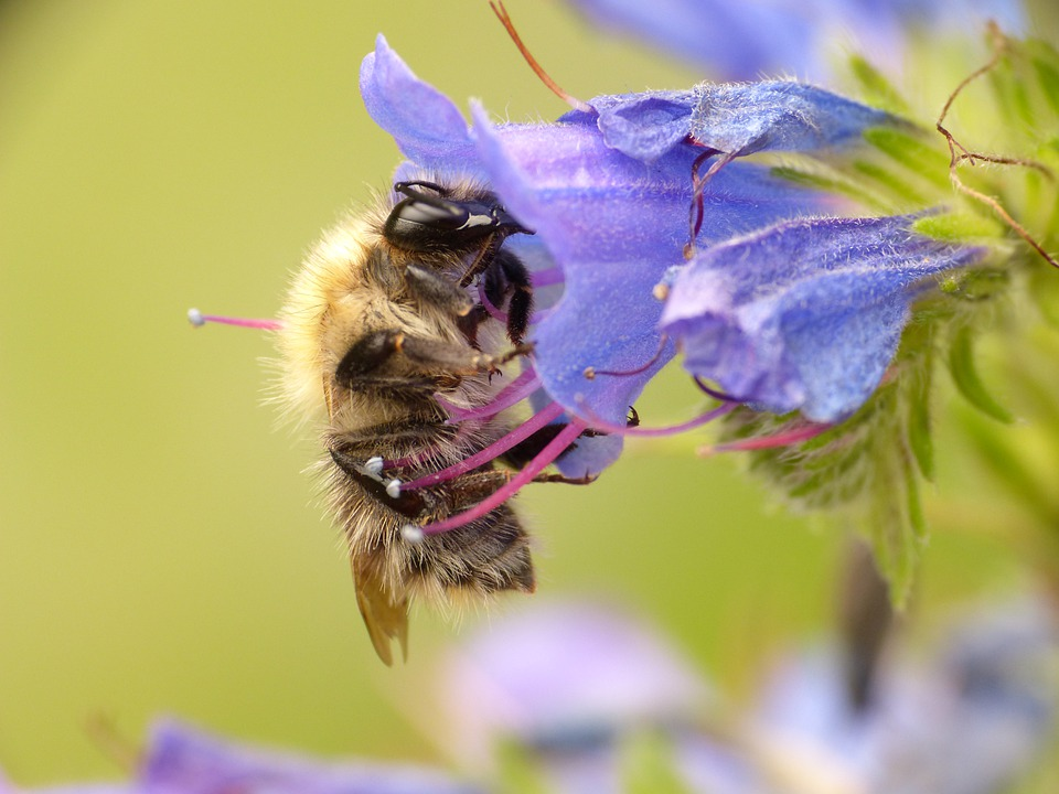 Bee, Wasp, Insect, Macro, Animal, Honey, Nature, Flower