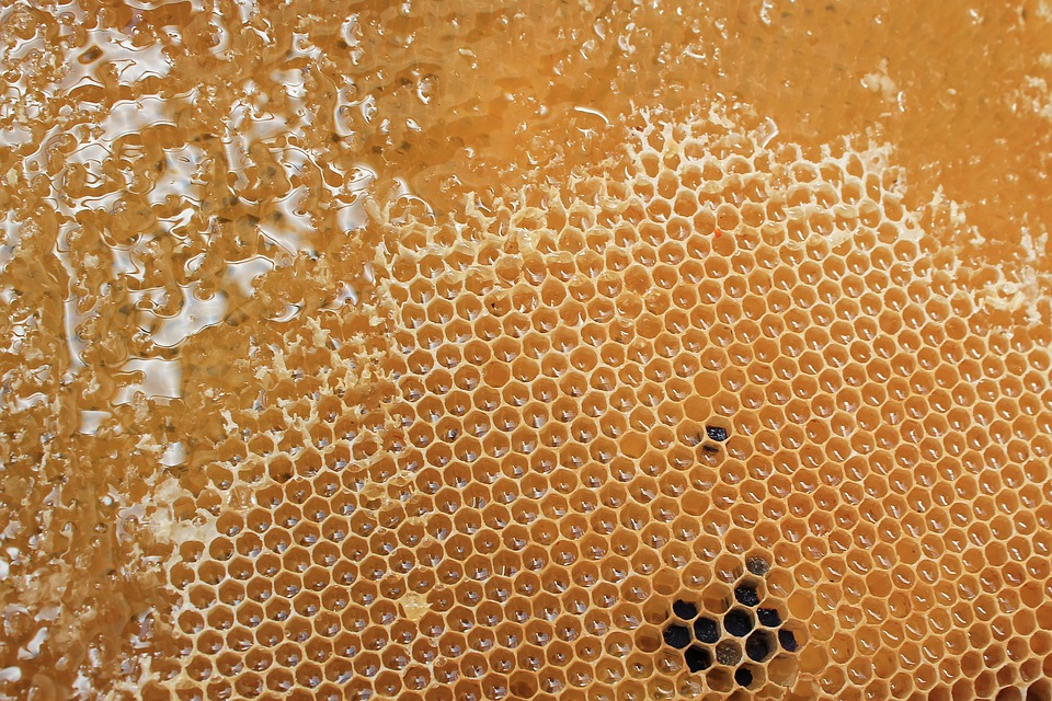 Honeycomb, Honey, Delicious, Sweet, Beehive