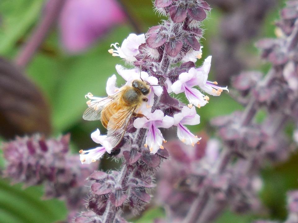 Honey Bee, Bee, Honey, Nature, Insect, Yellow, Sweet