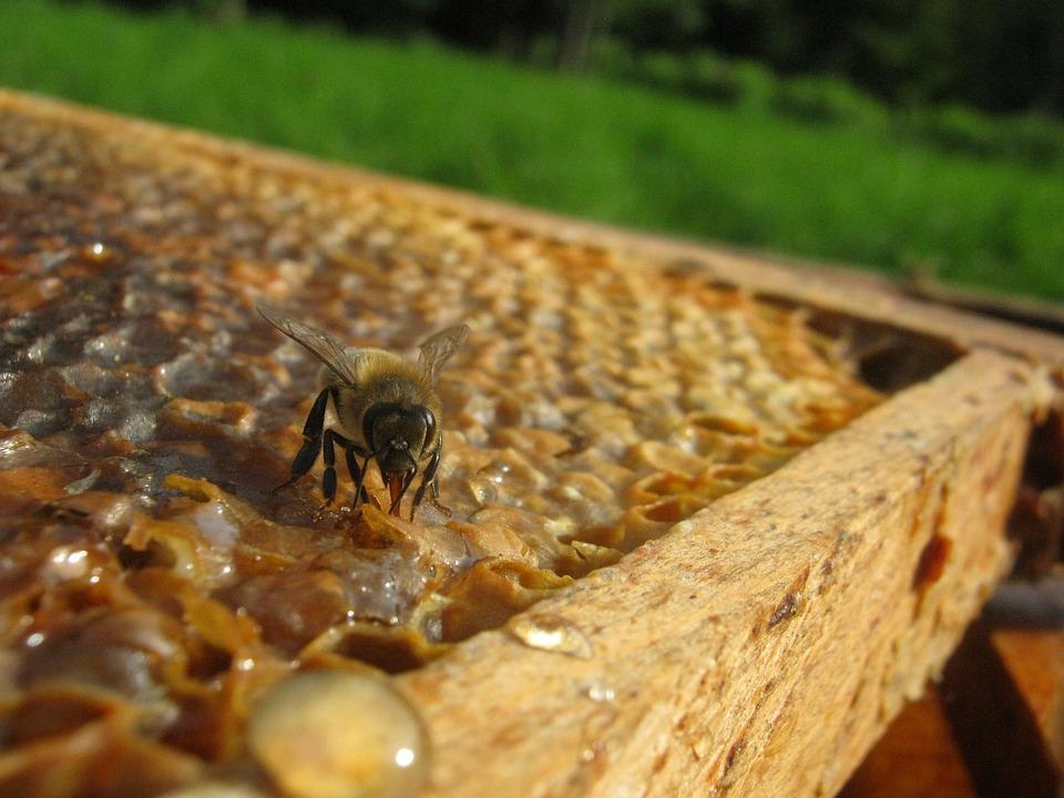 Bee, Hive, Wax, Honey, Beekeeping, Framework, Radius