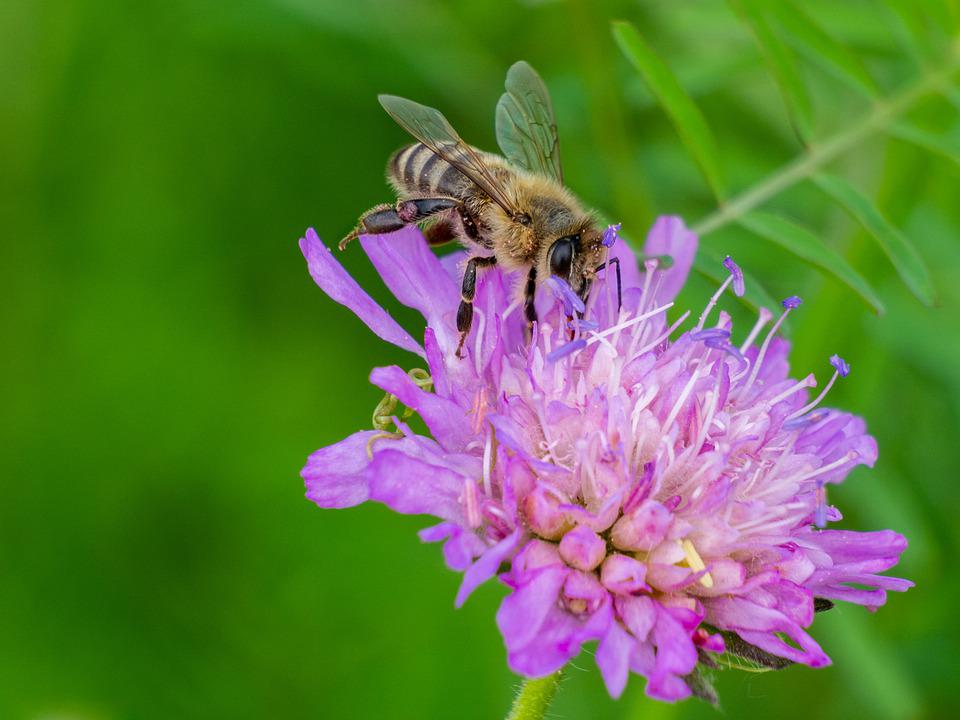 Bee, Insect, Fauna, Collection, Honey, Nectar, Worker