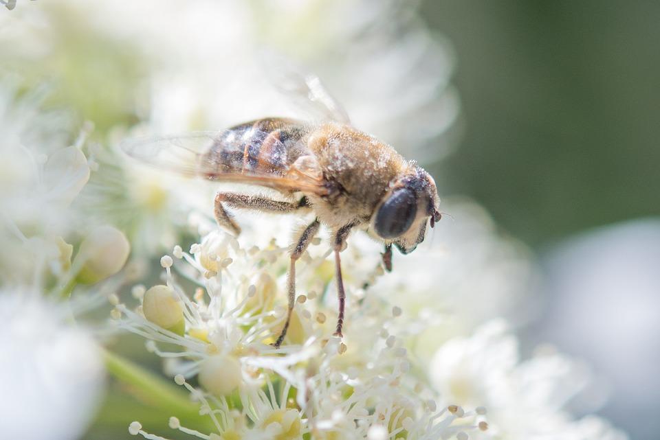 Insect, Bee, Wasp, Animal, Honey, Honeybee, Bug, Wild