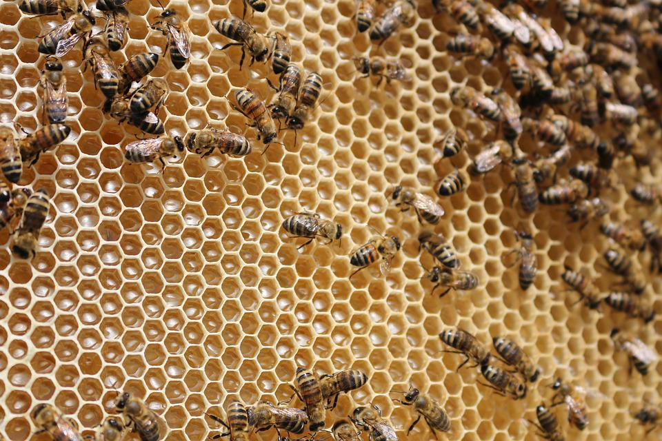 Beehive, Bees, Insects, Collects Nectar, Honeycomb