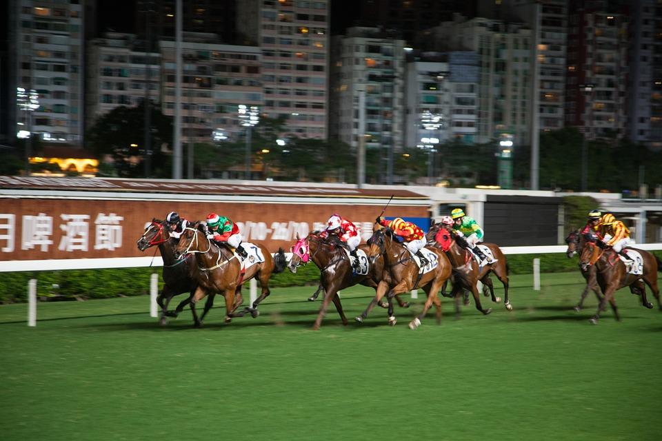Horse Racing, Hong Kong, Horse, Competition, Gallop
