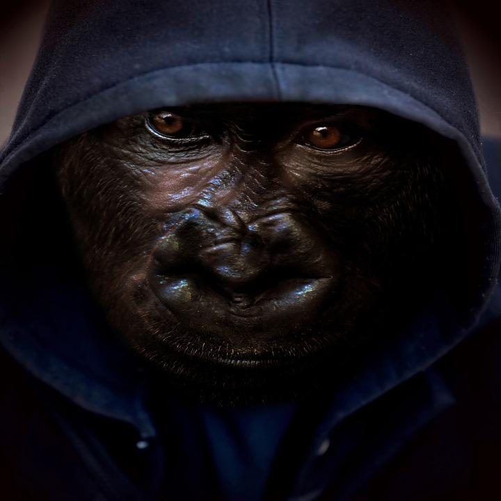 Monkey, Hoodie, Background, Portrait, Animal