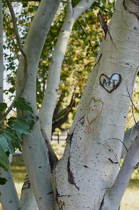 Park, Tree, Hooliganism