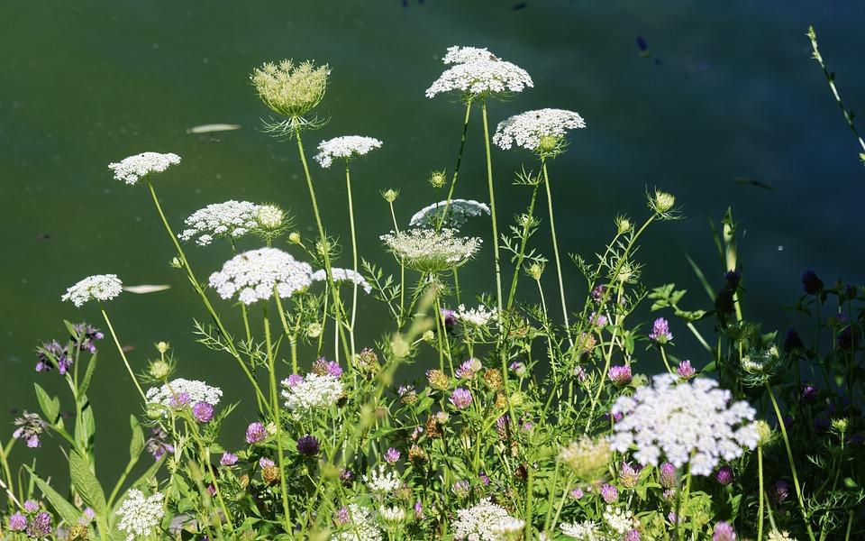 America, Flowers, Hope You Like It, Inflorescences
