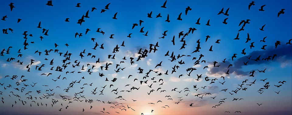 Birds, Sunset, Sky, Nature, Landscape, Flying, Horizon