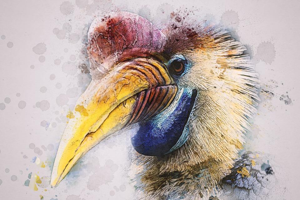 Animal, Bird, Hornbill, Helmet Hornbill