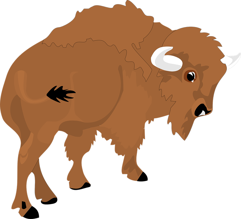 Bison, View, Large, Horns, Animal, Tail, Rear, Fur