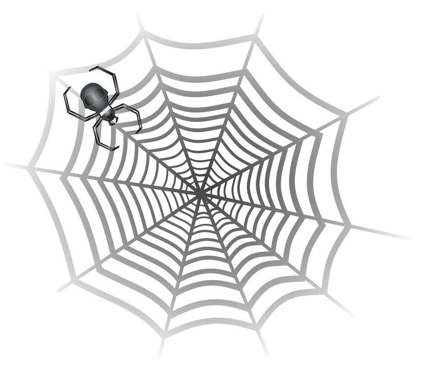 Spider, Cobweb, Spider Web, Spider's Web, Web, Horror