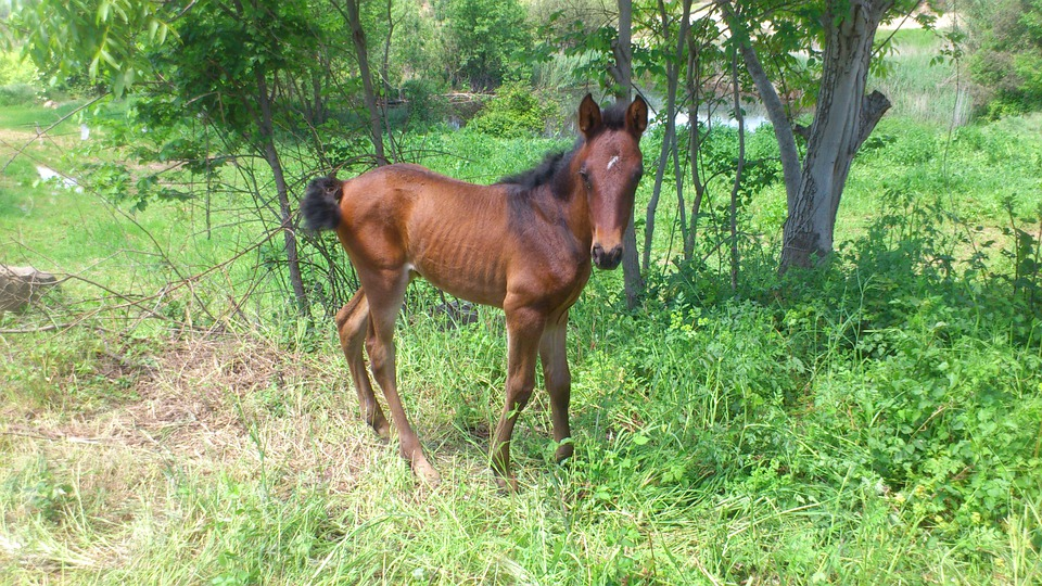 Horse, Foal, Andalusians, Animal