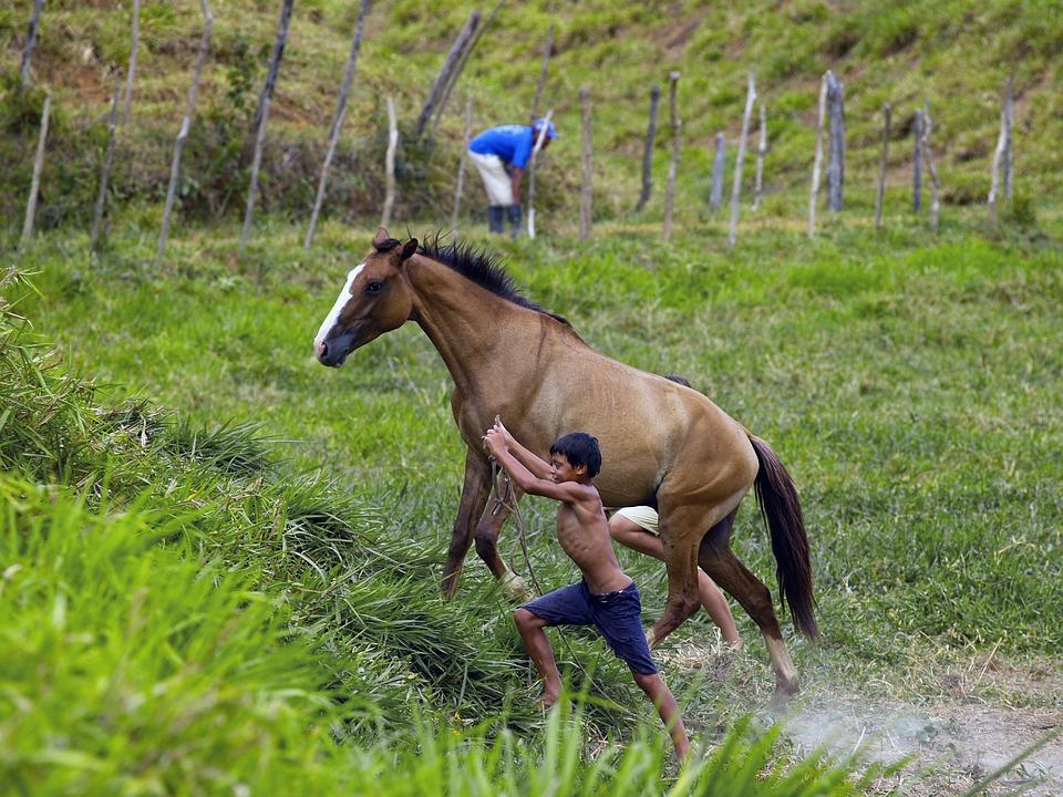 Brazil, Countryside, Horse, Child, Hacienda, Animal