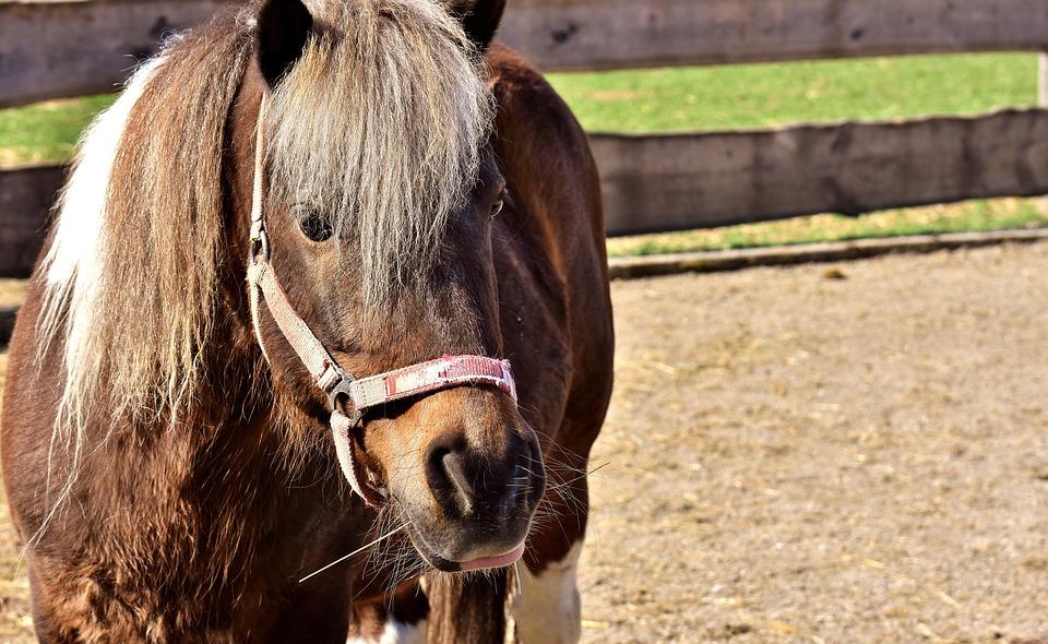 Horse, Animal, Pony, Seahorses, Nature, Cute
