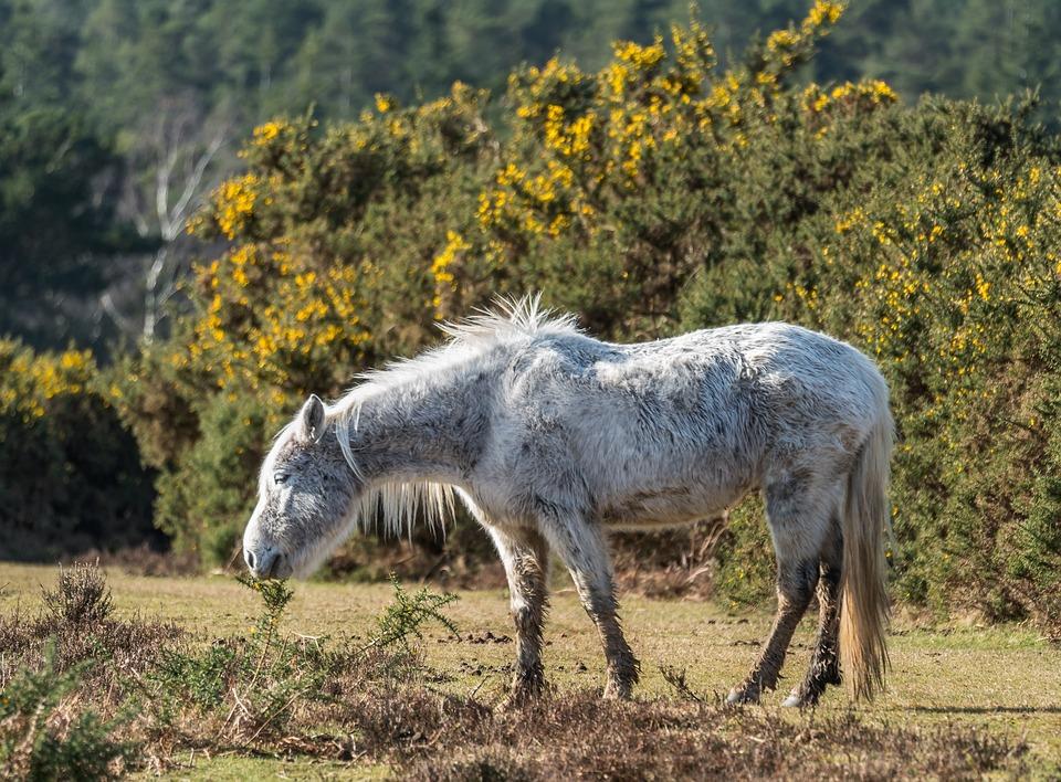 Nature, Animal, Grass, Field, Farm, Horse, Pony