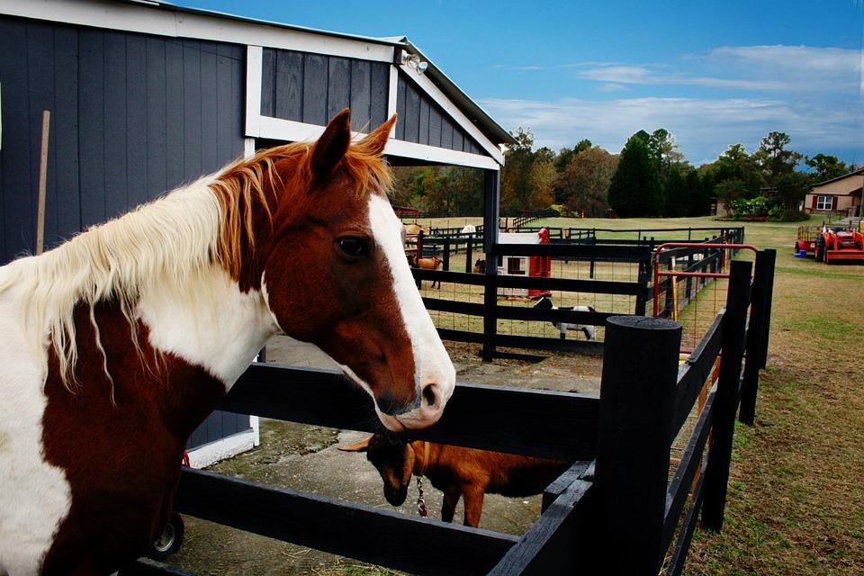 Horse, Farm, Animal, Pony, Equestrian, Mane, Mammal